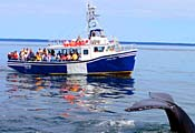 Brier Island Whale and Seabird Cruises Ltd.