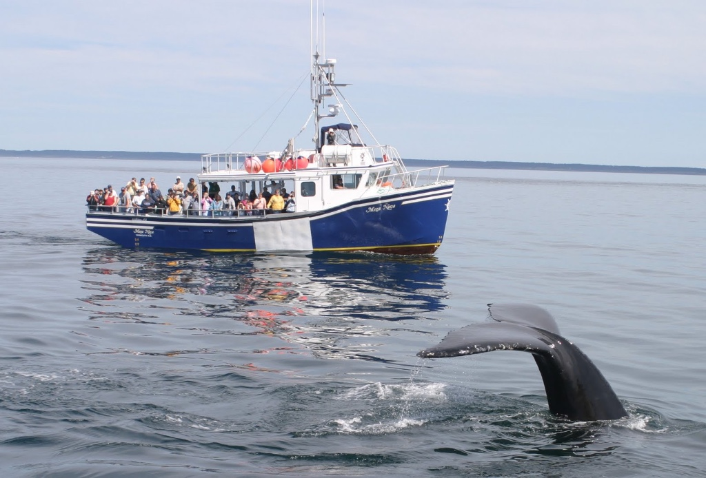 Brier-Island-Whale-and-Seabird